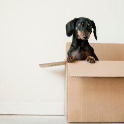 Perros y mudanzas. Me cambio de casa ¿Cómo afecta a mi peludo?