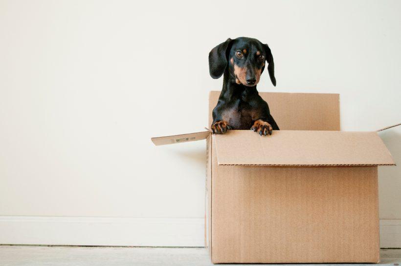 Me cambio de casa ¿Cómo afecta la mudanza a mi perro?