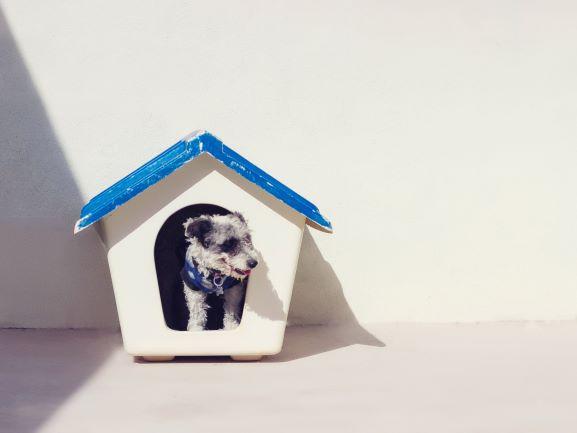 Guía para adoptantes y acogidas V: Ansiedad por separación