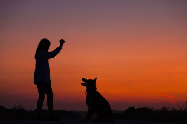 Guía para adoptantes y acogidas VI: Trucos para evitar futuros problemas