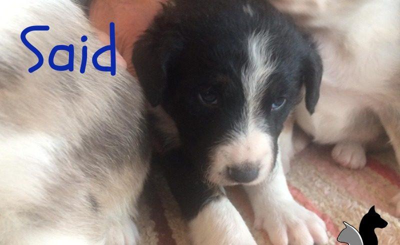 ¡¡¡Trece cachorros nuevos en Zarpas!!!