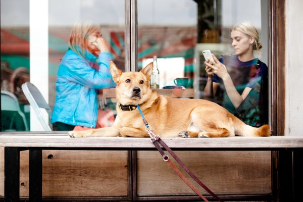 Cómo entrenar a tu perro a esperarse quieto