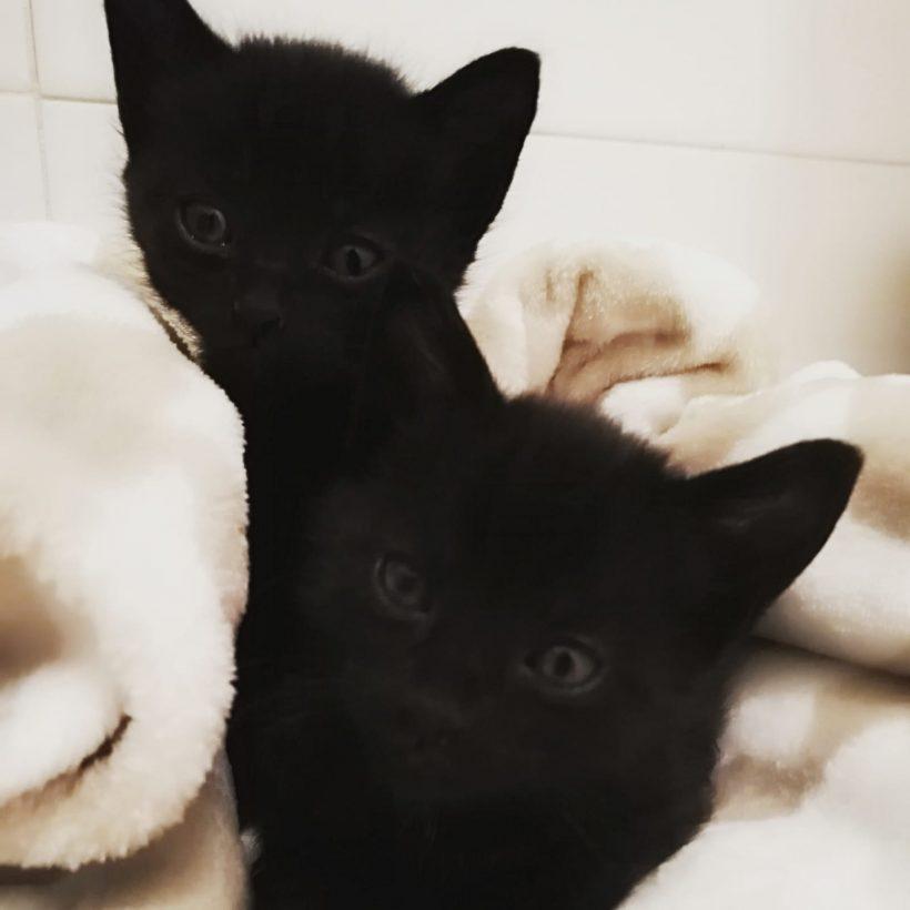 Bey y Rih