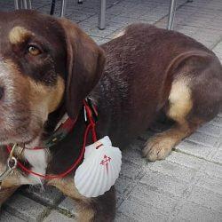 Guía del Camino de Santiago con perro: De Ponferrada a Santiago