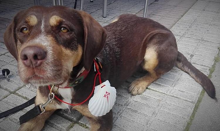 Camino de Santiago con perro: De Ponferrada a Santiago