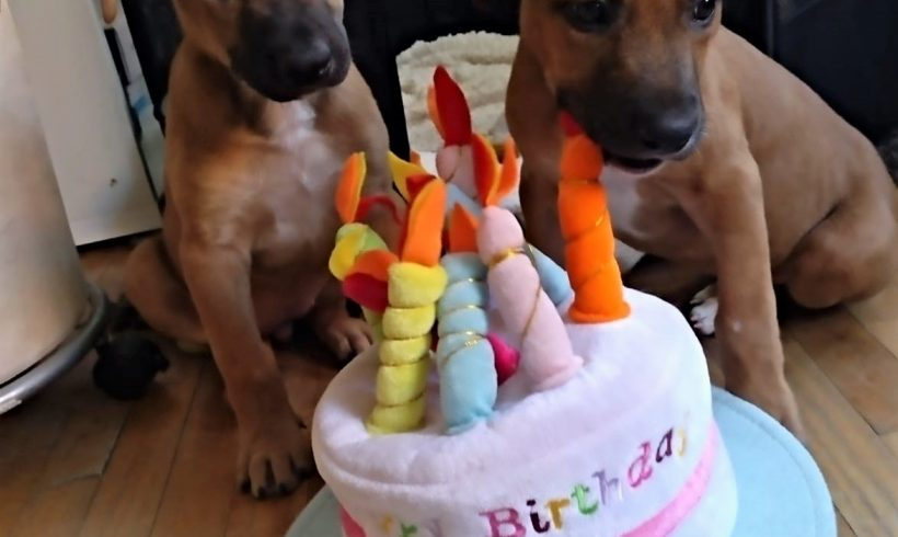Cupcake, la segunda de nuestras «seis magníficas» que ya tiene hogar