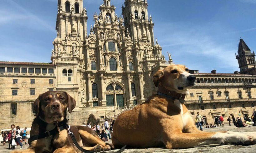 Alojamientos para perros en el camino de Santiago: Ponferrada-Santiago