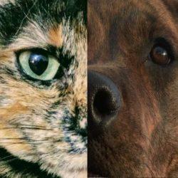 Los proscritos: perros y gatos que menos se adoptan