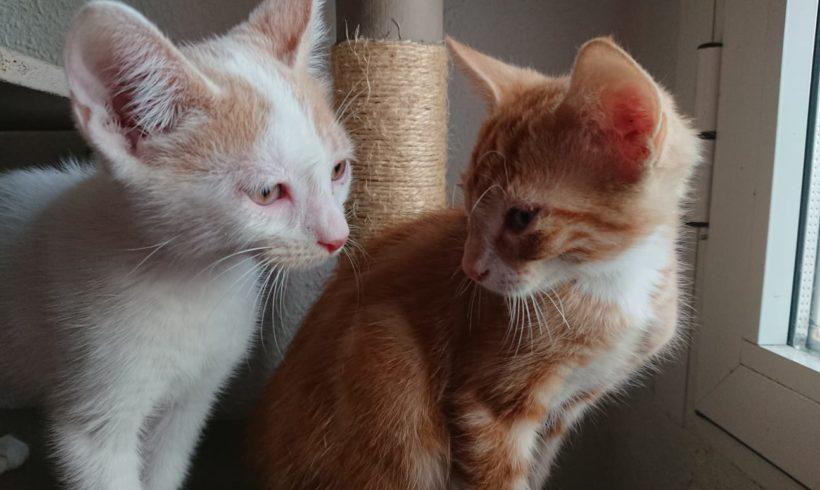¡Seis nuevos gatitos en Zarpas!
