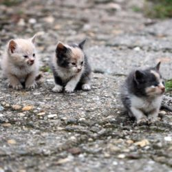 ¿Qué hacer si encuentro un gatito en la calle?