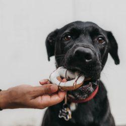 Alimentos prohibidos para los perros