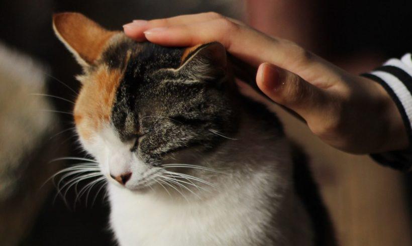 Cómo llevar a mi gato al veterinario
