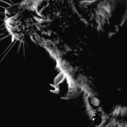 Por qué no es buena la combinación gato y cascabel