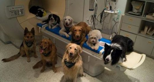 ¿Cómo funciona el cerebro de los perros?