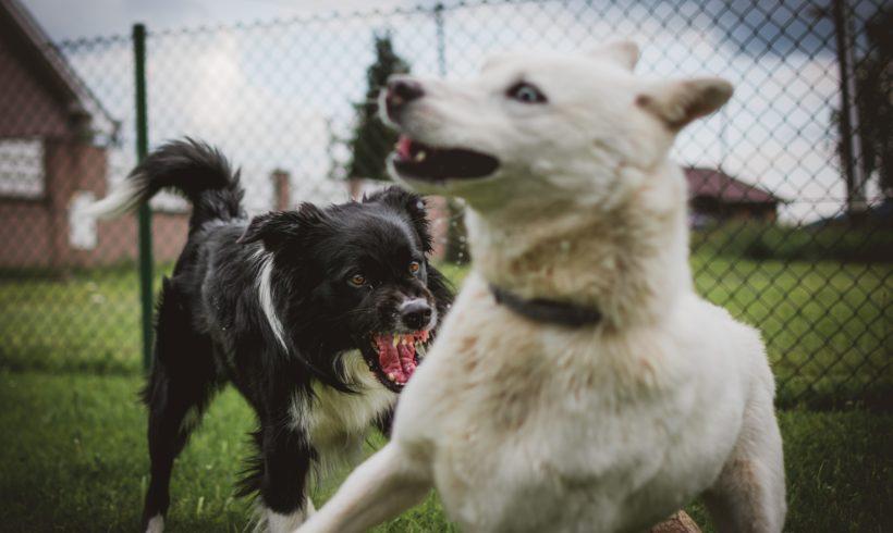 Cómo reaccionar ante una pelea de perros