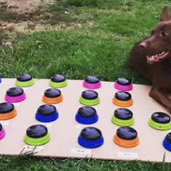 Una perra aprende a «hablar» gracias a un interesante método