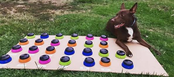 """Una perra aprende a """"hablar"""" gracias a un interesante método"""