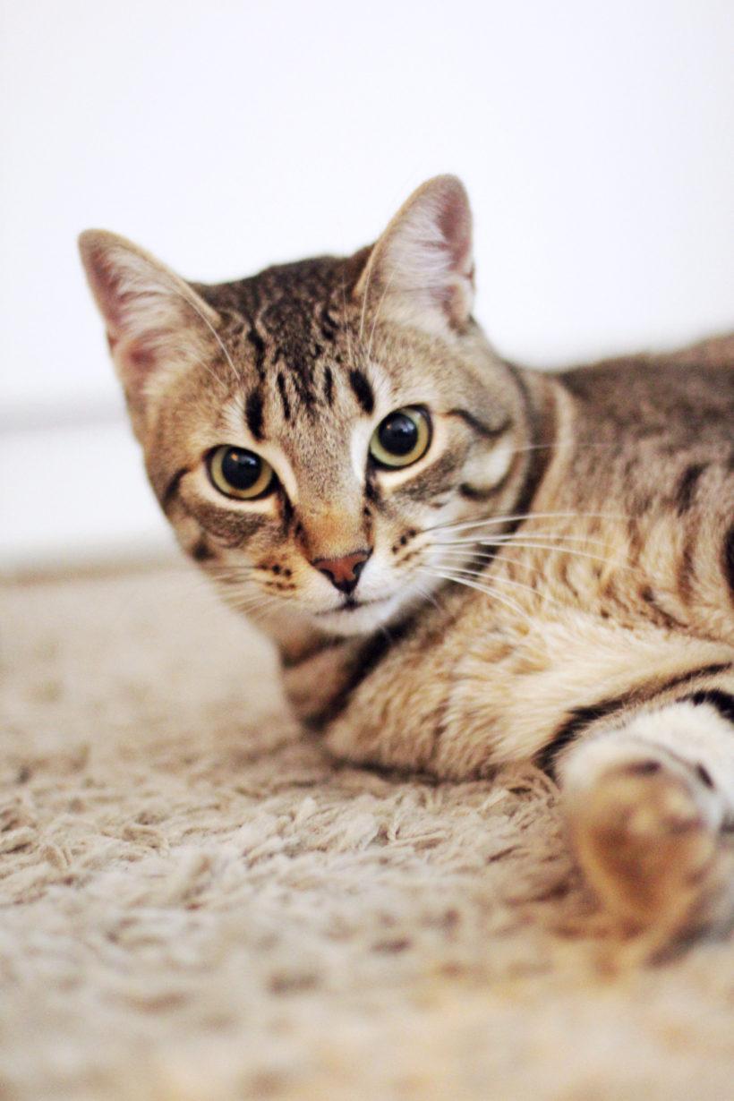 Beneficios de adoptar una mascota sin raza