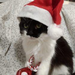 ¡Los zarpitos os desean feliz Navidad!