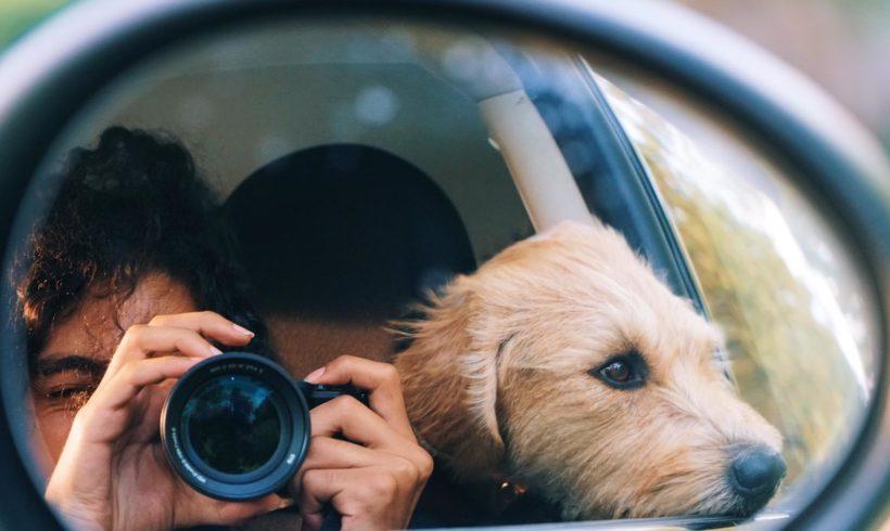 La emotiva reacción de una perra de Zarpas tras meses sin ver a su dueña