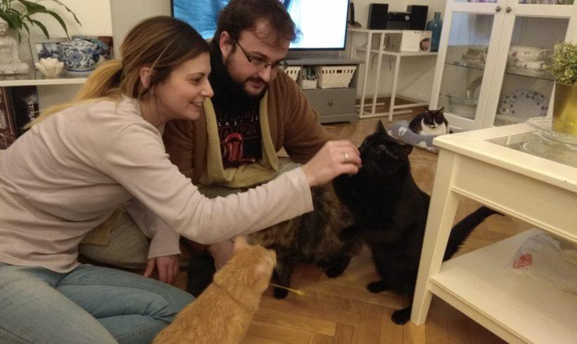 Cinco gatos de Zarpas muy positivos adoptados