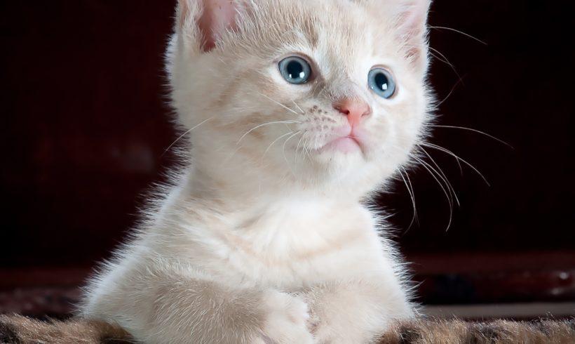 Ideas de regalos para tu perro o gato esta Navidad