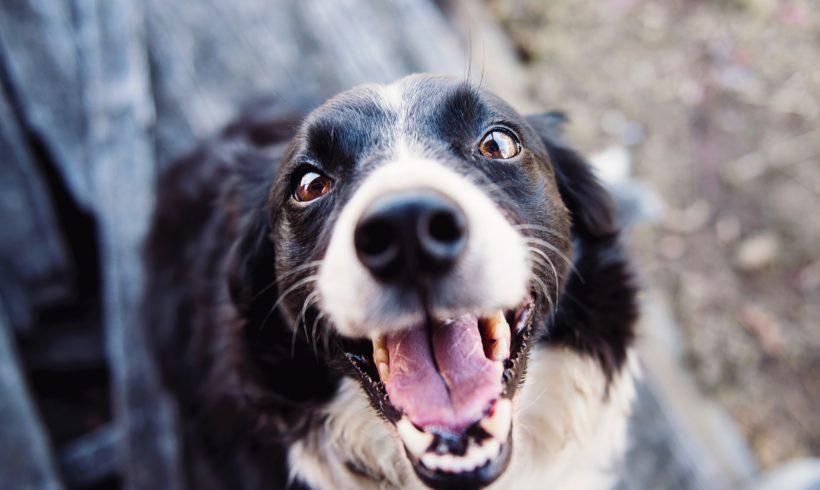 ¿Por qué mi perro tiene mal aliento y cómo combatirlo?