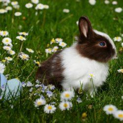 Cuidados básicos para tener un conejo en casa