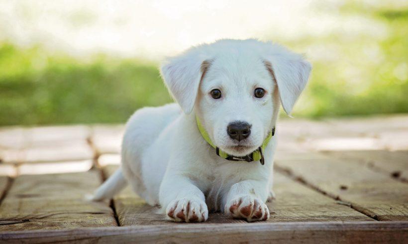 ¿Cómo ayudar a un perro a afrontar el estrés?