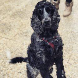 Epilepsia en perros y gatos