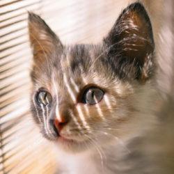 Gatos y confinamiento: ellos también lo sufren