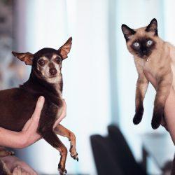 Tiña en perros y gatos. Síntomas, causas y tratamiento.