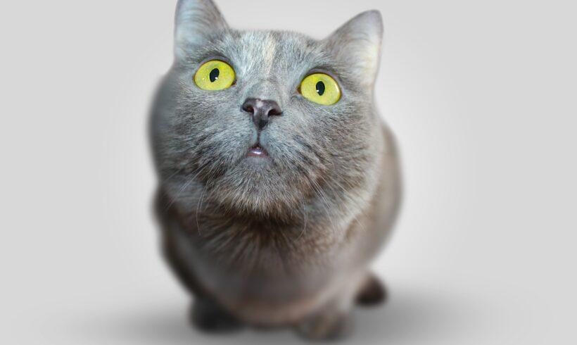 Caspa en gatos – Causas y tratamiento