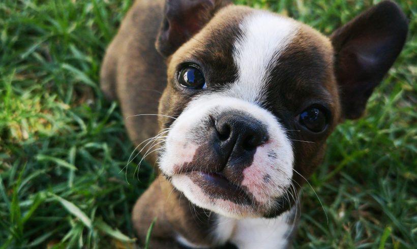 Hernia discal en perros