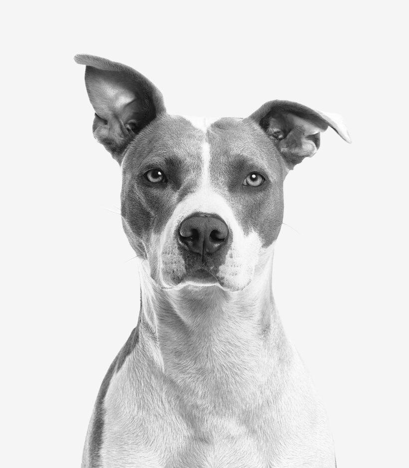 Otitis canina – Causas, síntomas y tratamiento
