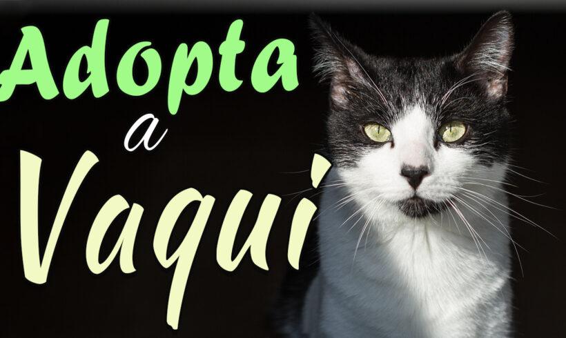Vaqui, un compañero perfecto para tí y tu gato