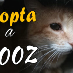 Enamórate de Sooz, la gata en la que nadie se fija :(