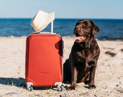 Consejos para viajar con tu perro en avión