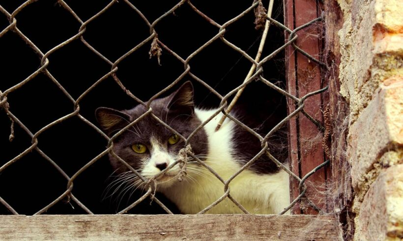 Los peligros REALES de no tener un hogar protegido para gatos