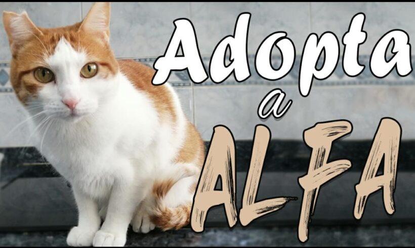 Adopta a Alfa. Lo tiene todo para triunfar.