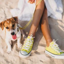 Playas para perros. Qué tienes que saber