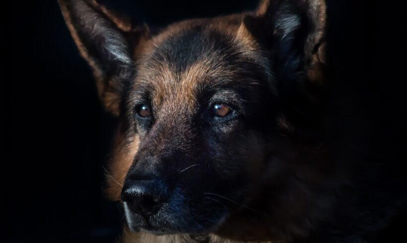 Coronavirus canino – Síntomas, contagio y tratamiento