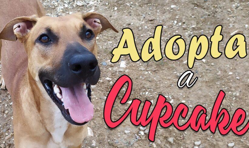 Adopta a Cupcake, una perra 10