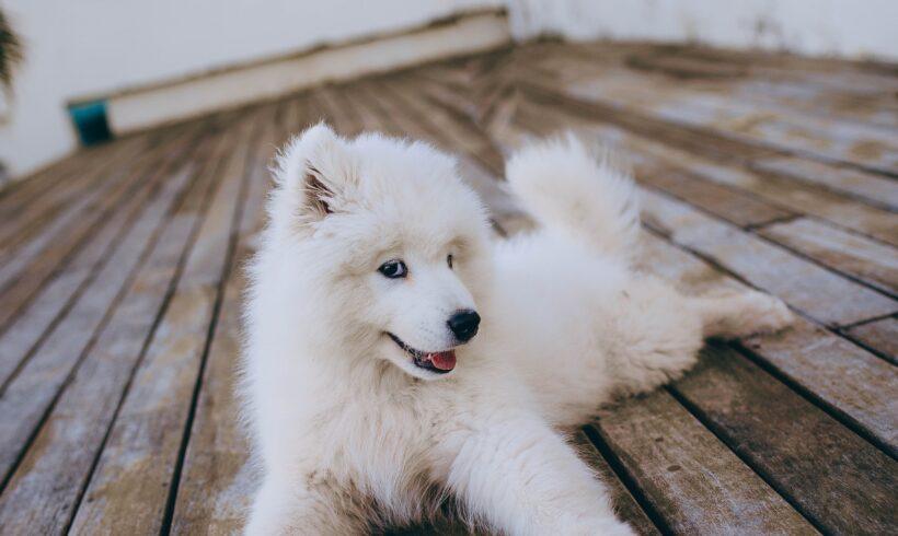 Coprofagia en perros. Causas y remedios.