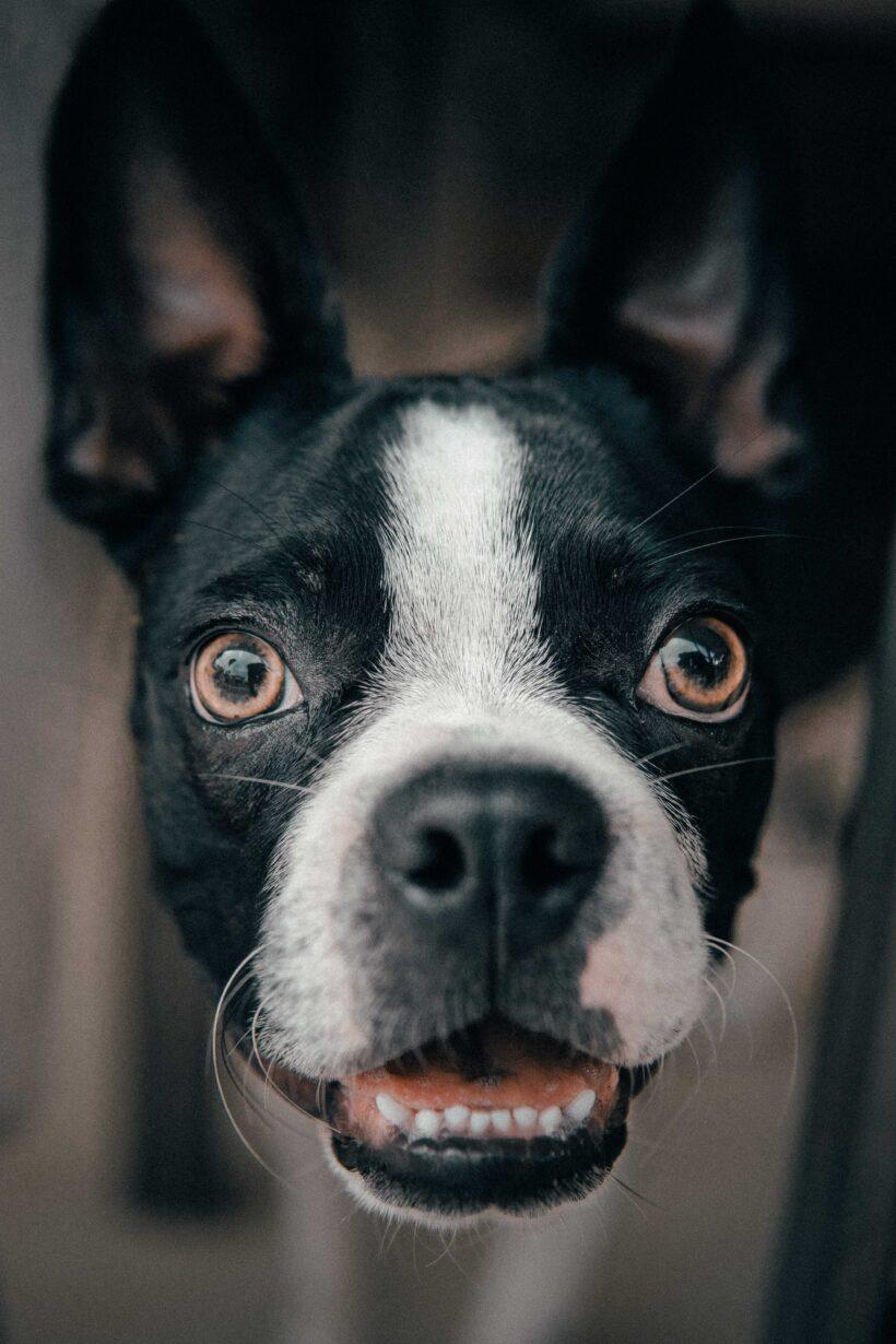 Enfermedades comunes en perros. Parte I
