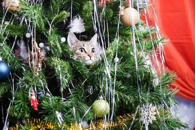 Mascotas vs adornos de Navidad