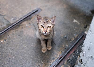¿Qué hago si me encuentro un animal en la calle?