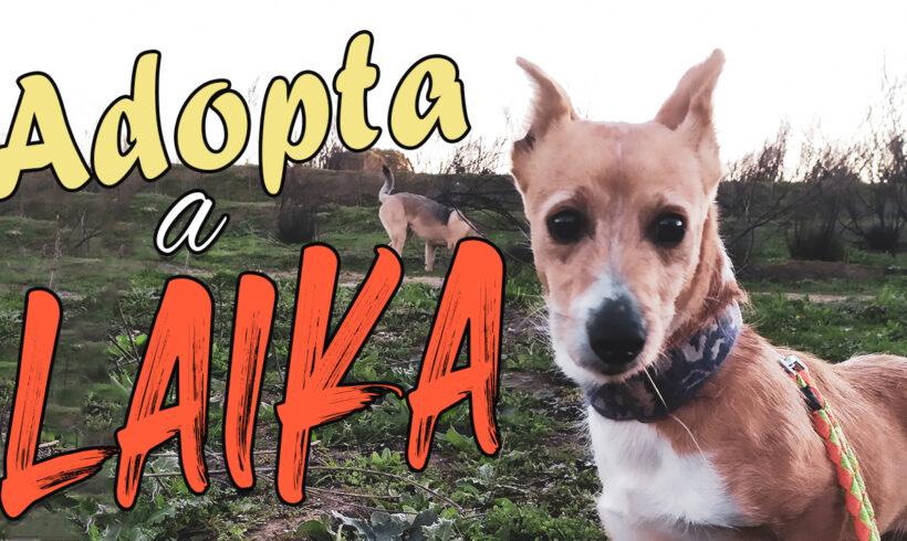 Laika merece de nuevo ser feliz