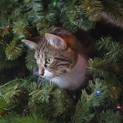 ¿Qué hago con mi mascota estas navidades?