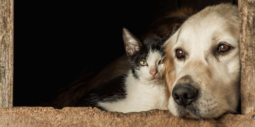 """Los animales son considerados """"bienes muebles semovientes"""" en la legislación española, ¿lo sabías?"""